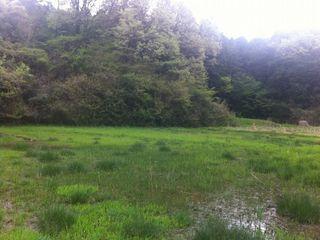 緑豊かな田園風景