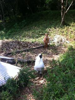 入口付近で山羊さんとニワトリさんがお出迎え