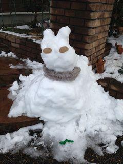 雪うさぎ?かわいい!