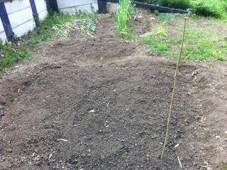 これから苗を植えます