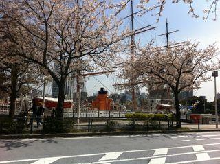 さくら通りから見た日本丸