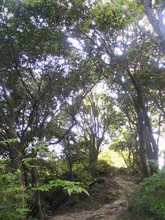 新緑の木々に囲まれて