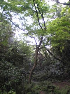 森の中に一人紛れ込んだような気分