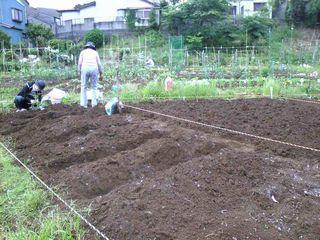 いよいよ苗を植え始める