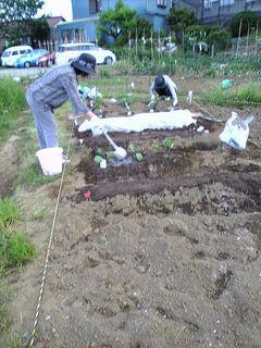 茄子の苗に水をたっぷりとかけます