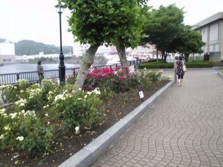横須賀の軍港が見えます