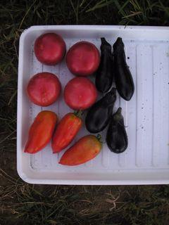 今日の収穫は最近では一番少なかった