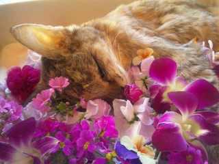 花に囲まれて眠るメイ