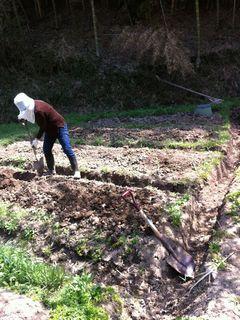 苗を植える前に牛糞と腐葉土を撒いた。