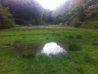 カルガモがいた湿地の池