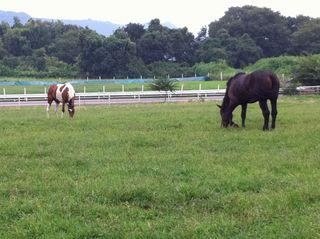 2頭の馬が牧場の草を食んでいた